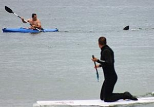 Shark Tailgates Kayaker