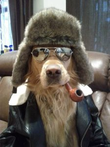 Way Cool Dog